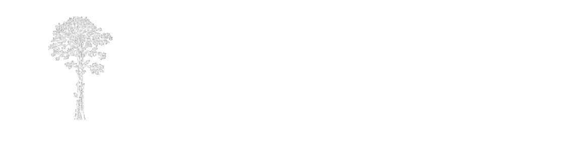 seb lions filmmaker